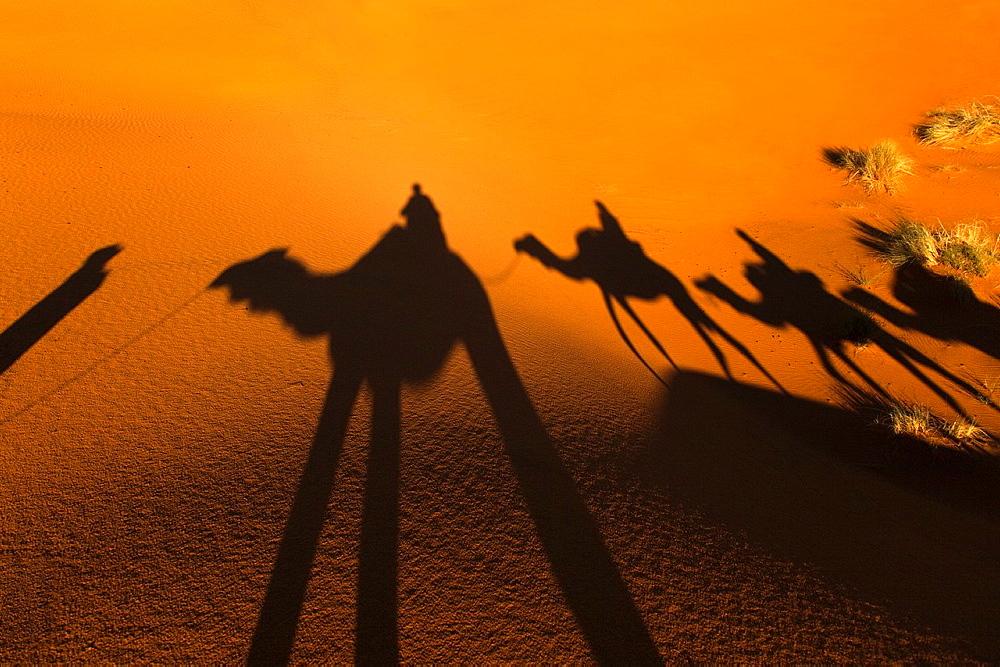 Camal Shadow Erg Chebbi Dunes Sahara Desert Morocco North Africa March