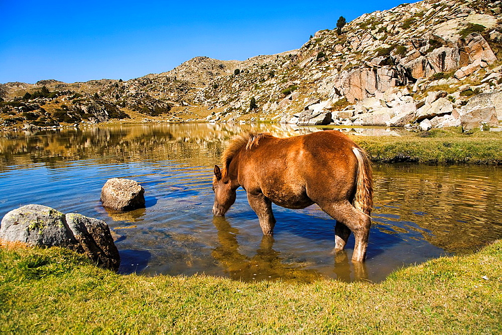 Horse Rodo Lake Estany Rodo, Madriu Valley, Andorra