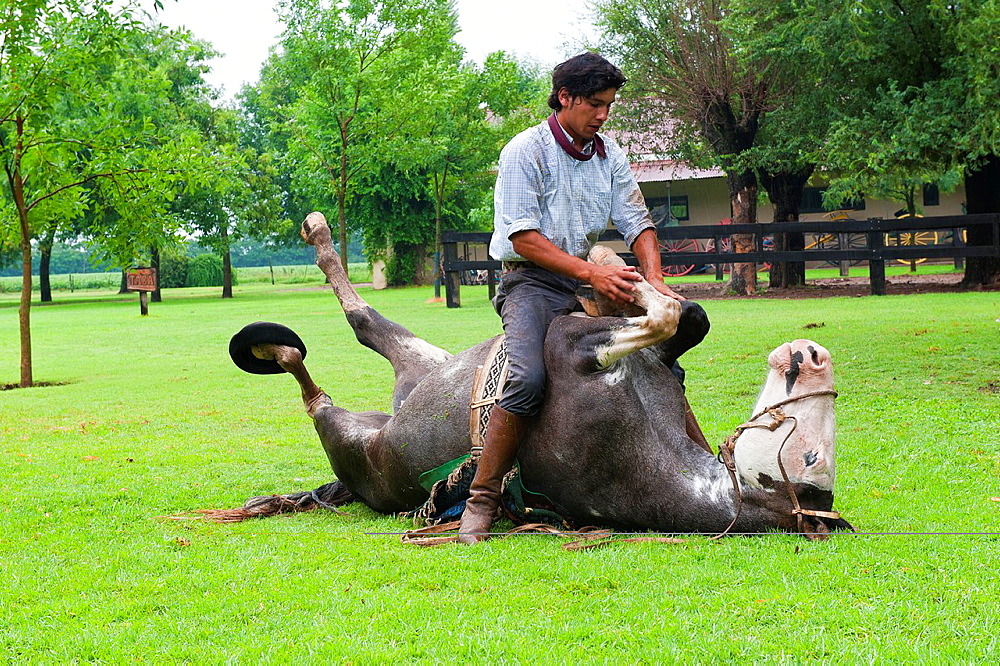 Gaucho demonstrating his skills with his horse, San Antonio de Areco, Buenos Aires Province, Argentina, South America