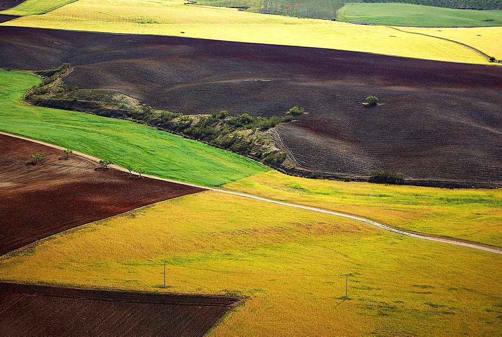 Aerial view of varied fields and planting in Los Velez Andalucia, Spain