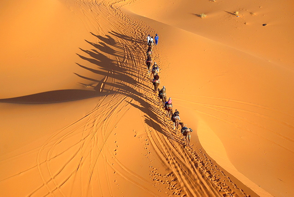 aerial view of camel train on sand dunes erg chebbi, morocco