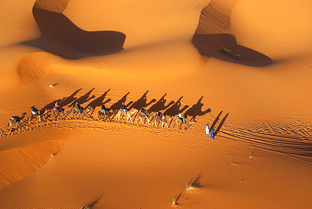 aerial view of camel caravan on sand dunes erg chebbi