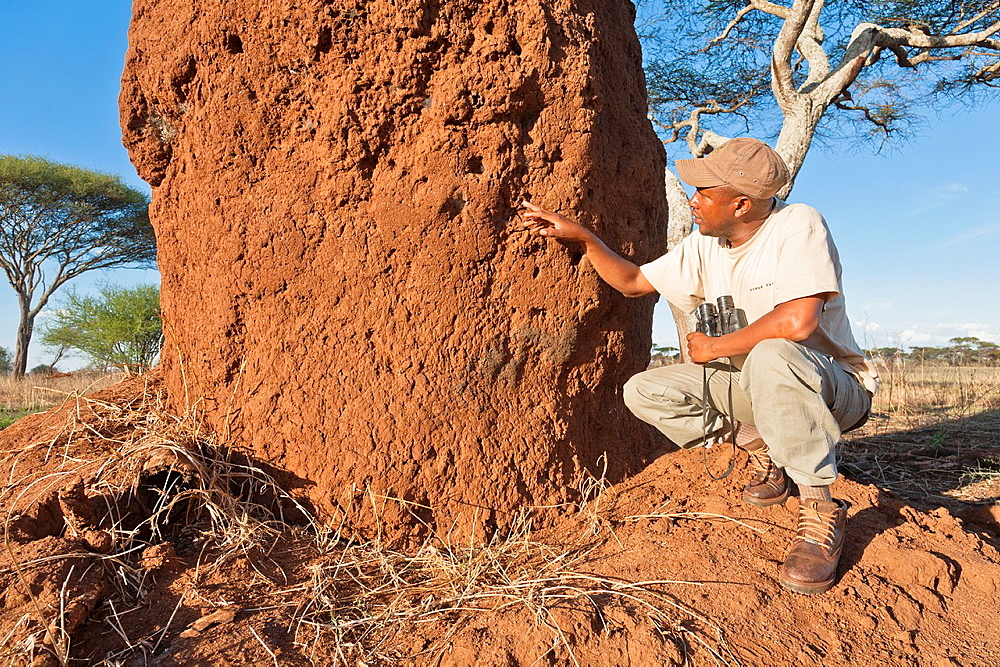Tour guide explaining the construction of a termite mound