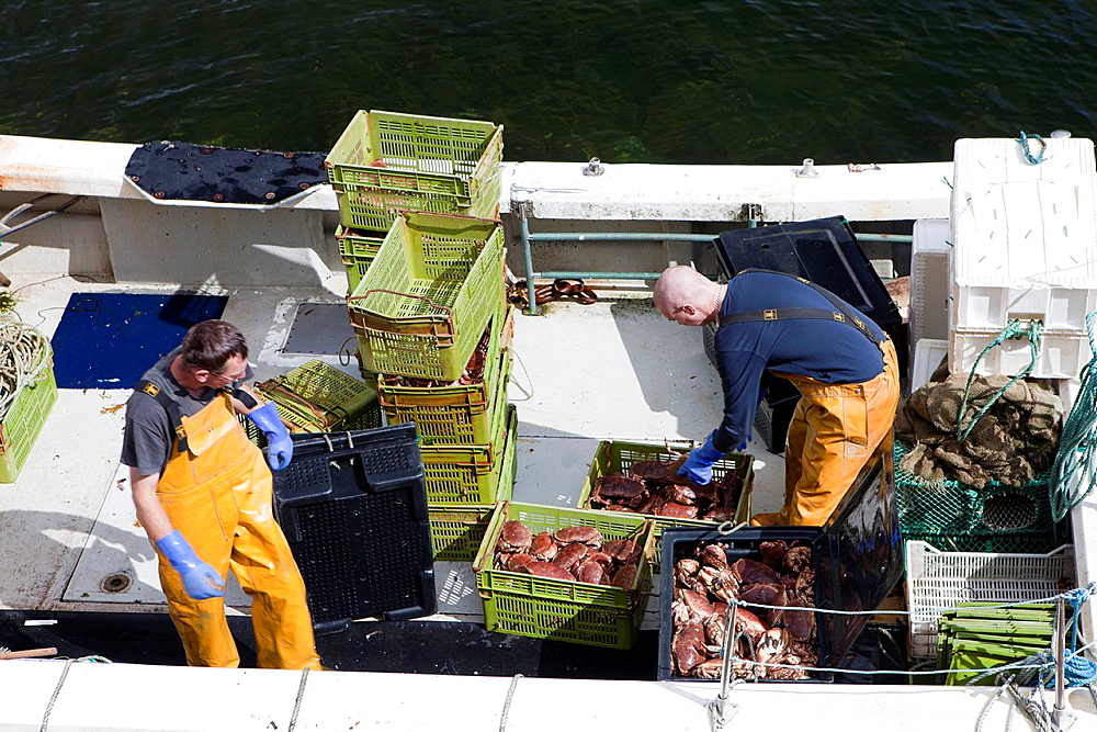 Fishers unloading crabs in the harbour of Portree or Port Righ village, Isle of Skye - Ant-Eilean Sgitheanach -, Highlands, Scotland - 817-333981
