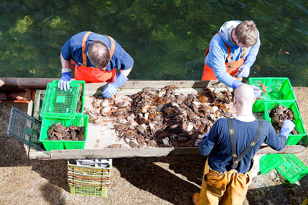 Fishers unloading crabs in the harbour of Portree or Port Righ village, Isle of Skye - Ant-Eilean Sgitheanach -, Highlands, Scotland - 817-333982