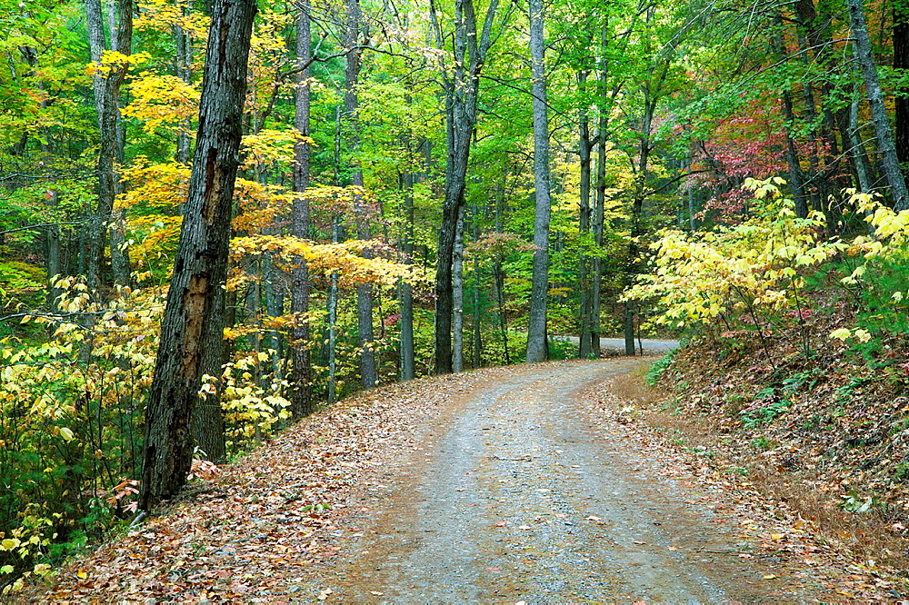 Turning Autumn leaves along Rich Mountain Road in Great Smoky Mountains National Park, USA