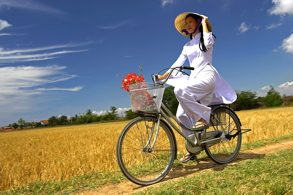 Young woman in conical hat and traditional white ao dai costume rides bicycle in rice fields near Phan Thiet south east Vietnam