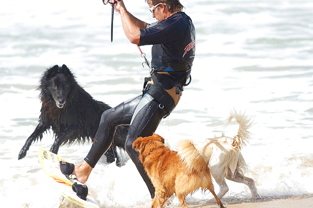 Kiteboarder and dogs at sea shore