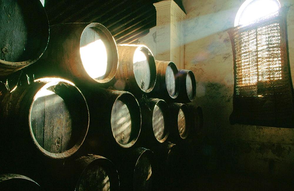 Stacked oak barrels in one of the cellars at the Bodega Gonzalez Byass, Jerez de la Frontera, Cadiz province, Andalusia, Spain