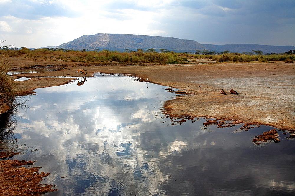 Serengeti National Park, Tanzania - 817-348728