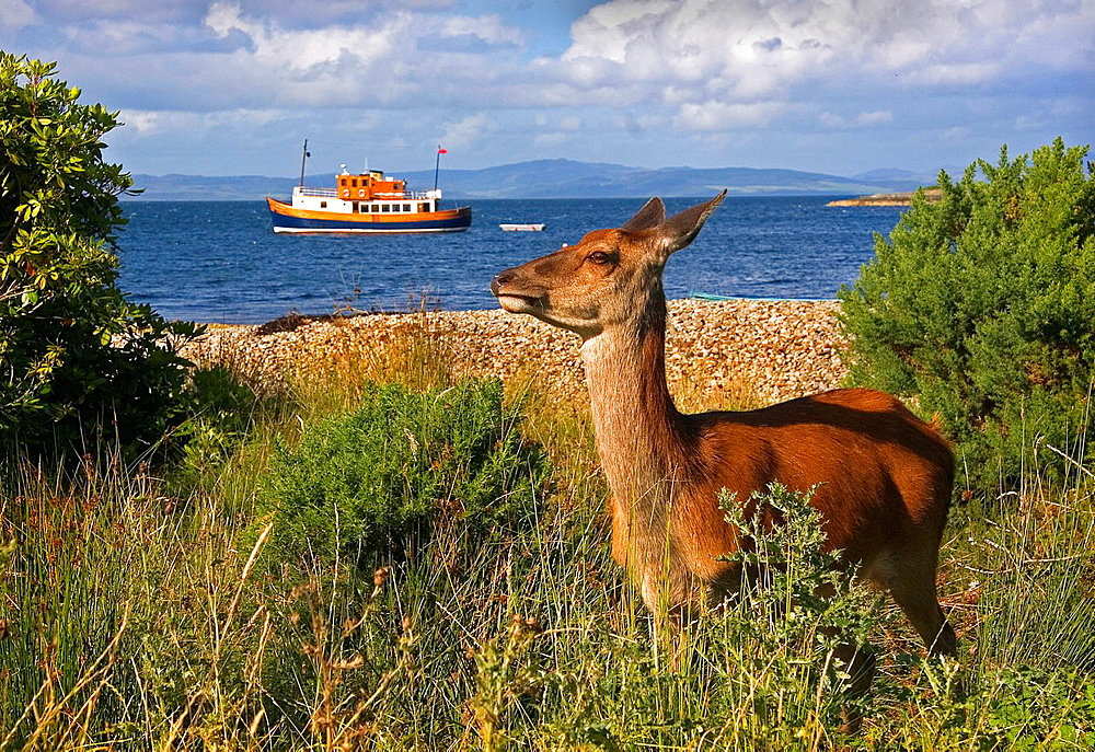 Arran Island Scotland United Kingdom