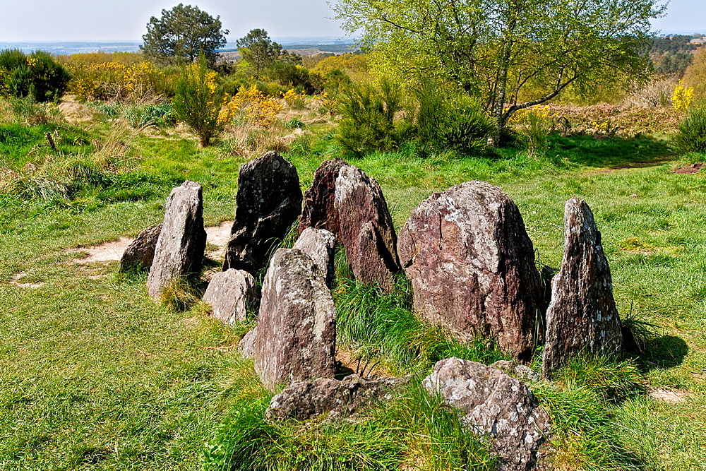 the Hotier viviane, Called Tomb of the Druids also, has it peaks 191 meters. This is a megalithic monument in the shape of a chest. broceliande, Morbihan, Brittany, France