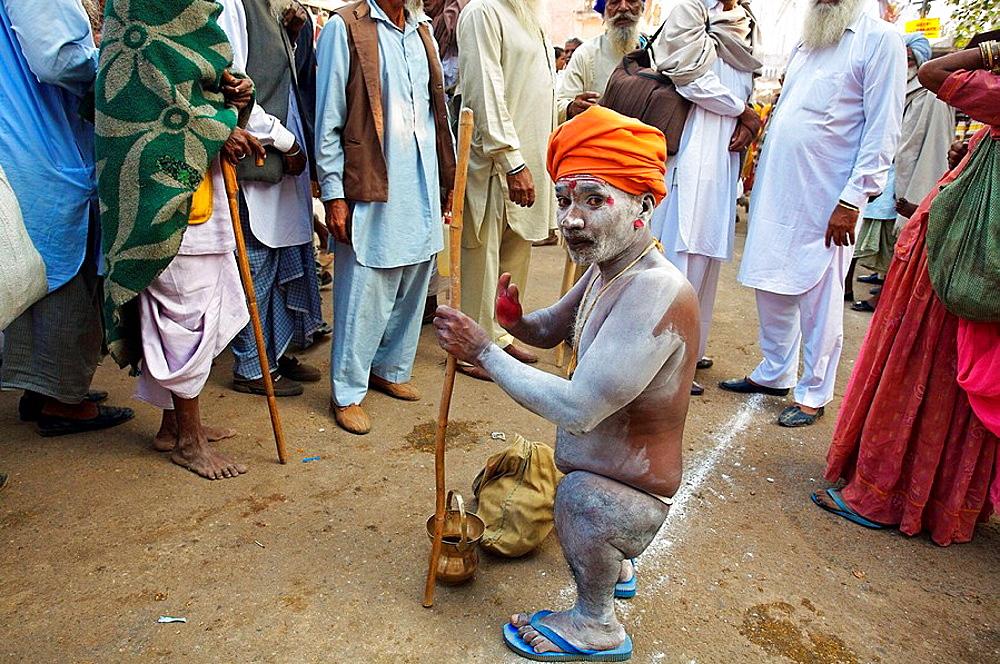 Shadu, Pushkar camel fair, Pushkar, Rajasthan, India, Asia - 817-37413