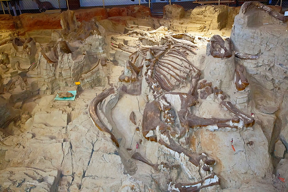 Hot Springs, South Dakota - The Mammoth Site displays mammoth bones approximately 26,000 years old, left as they were discovered in a former sinkhole