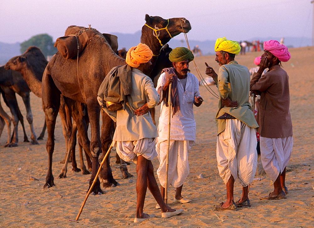 India Pushkar Camel Fair - 817-376209