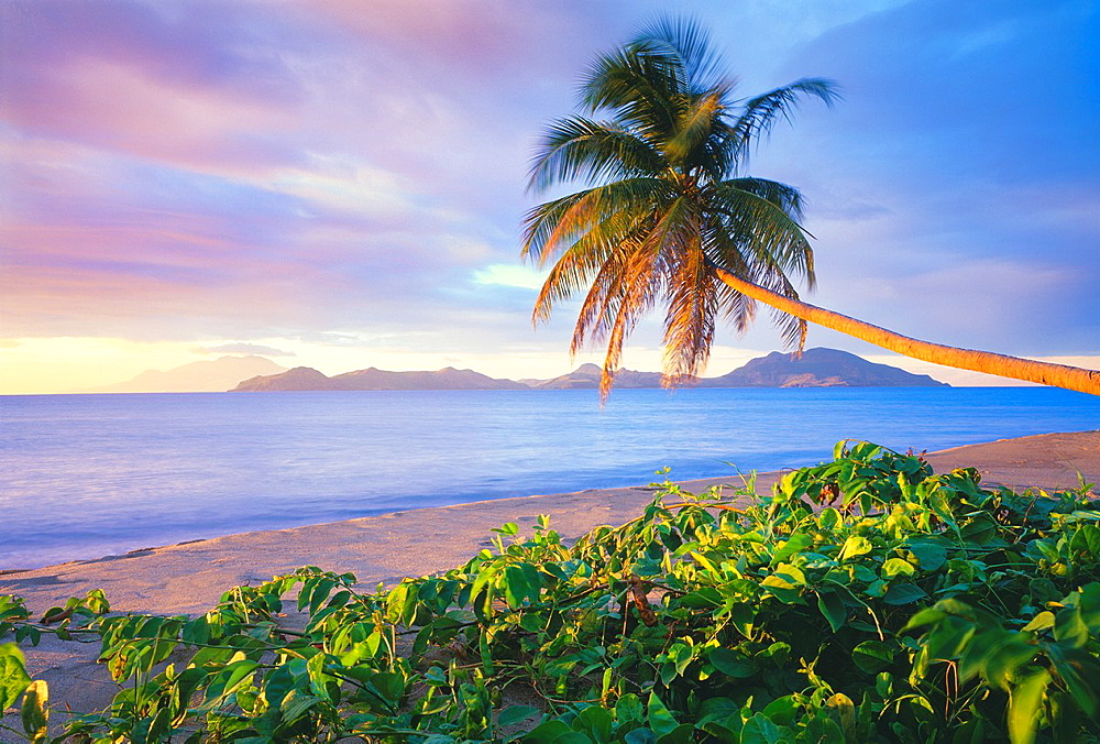Coconut palm tree Cocos nucifera on Pinney´s Beach, with Island of St Kitts in distance Island of Nevis, Leeward Islands, Lesser Antilles, Caribbean