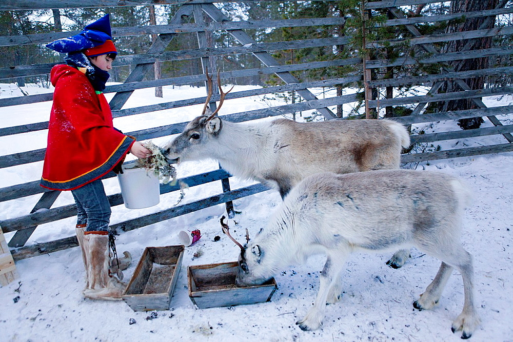sami boy in lapland Finland