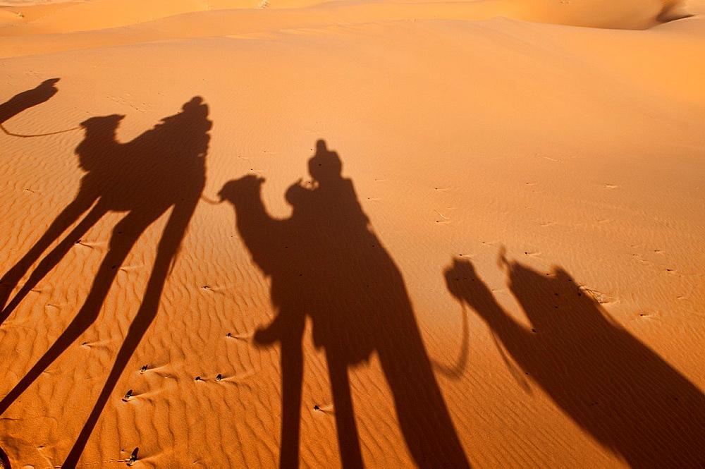 camel silhouettes on a sand dune in the Sahara near Merzouga, Erg Chebbi, Morocco