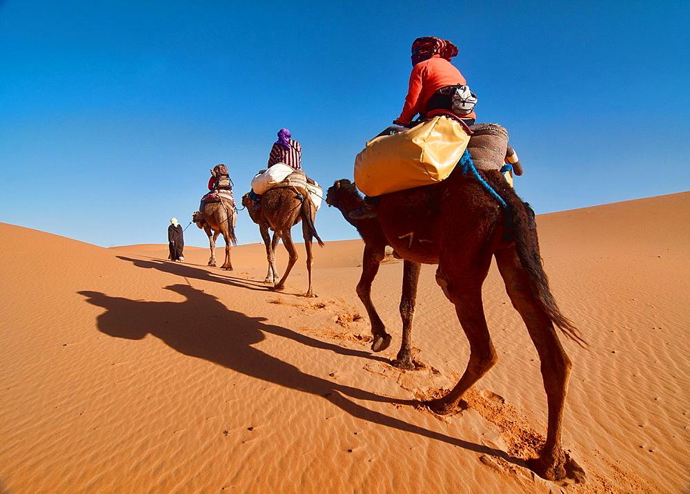camel trekking in the Sahara at Erg Chebbi, Morocco