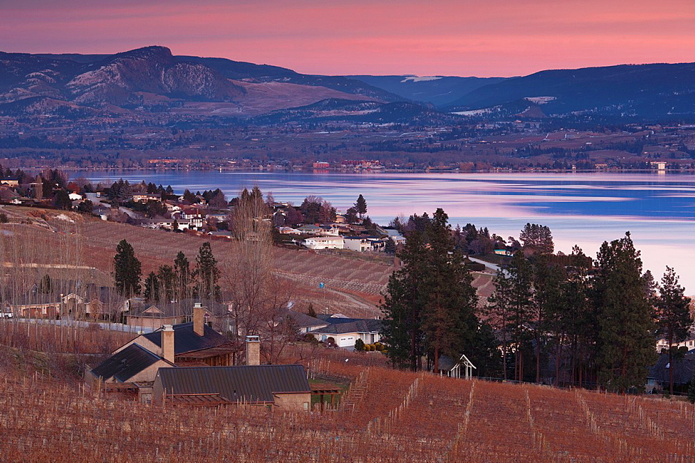 Canada, British Columbia, Okanagan Valley, West Kelowna, vineyard and lake, winter, dusk