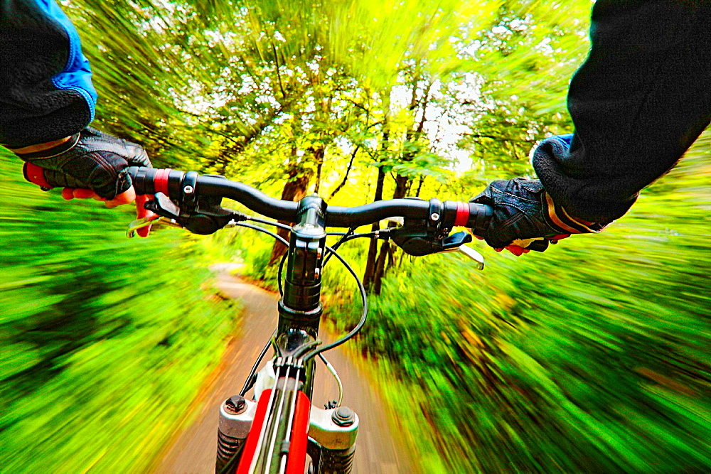 Cyclist riding along a forest path.