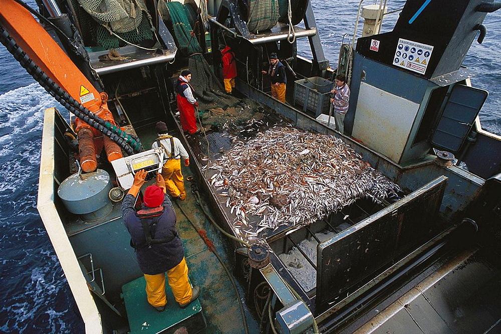 Fishing port of Vigo, Galicia, Spain, Opening the net onto the trawler deck