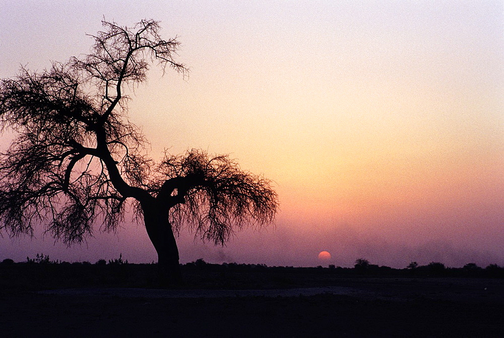 Bush landscape at sunset around NÂ¥djamena, Chad, Central Africa