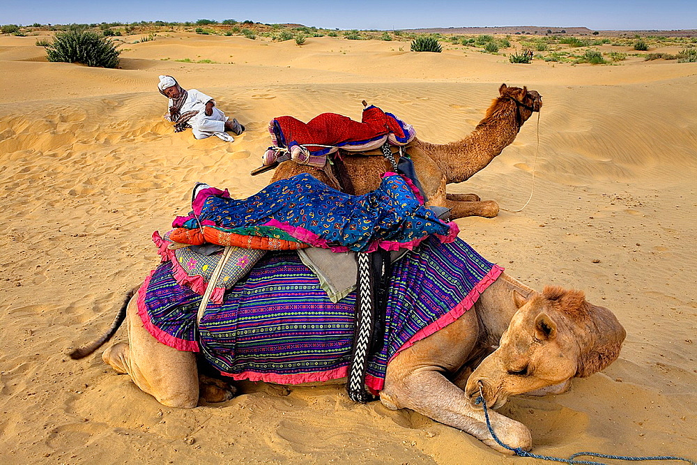 Man with camels on Sam Dunes in Desert National Park in the Great Thar Desert,near Jaisalmer, Rajasthan, India