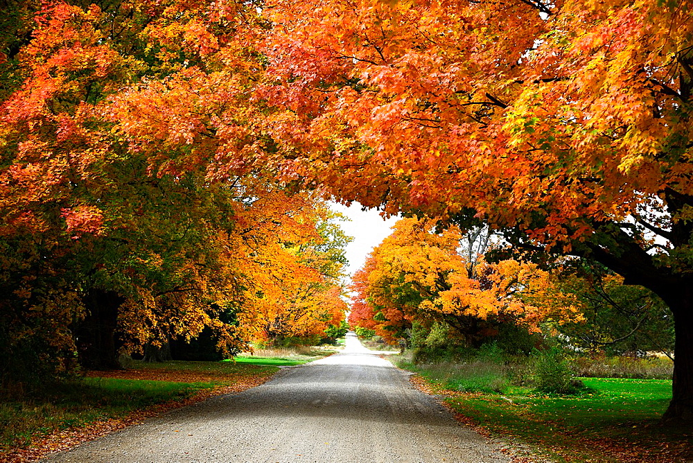 Country road with colorful fall leaves autumn trees Ohio