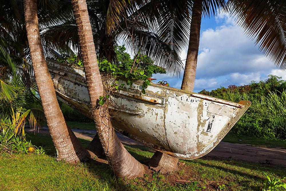 Boat in a tree, near Punta Tuna, Puerto Rico