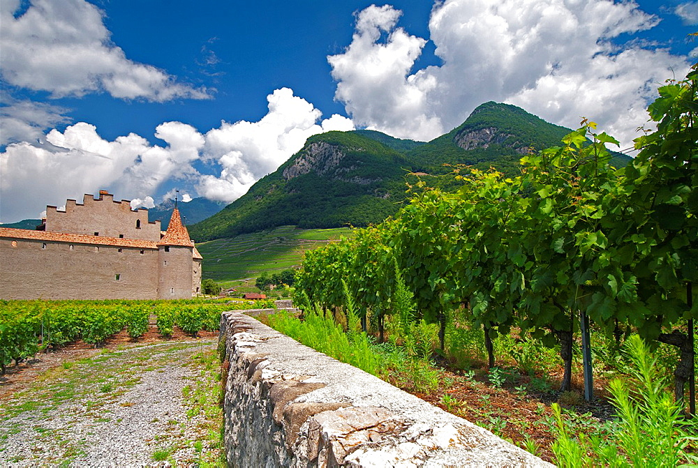 Chateau Díaigle Surrounded By Vineyards, Switzerland, Europe