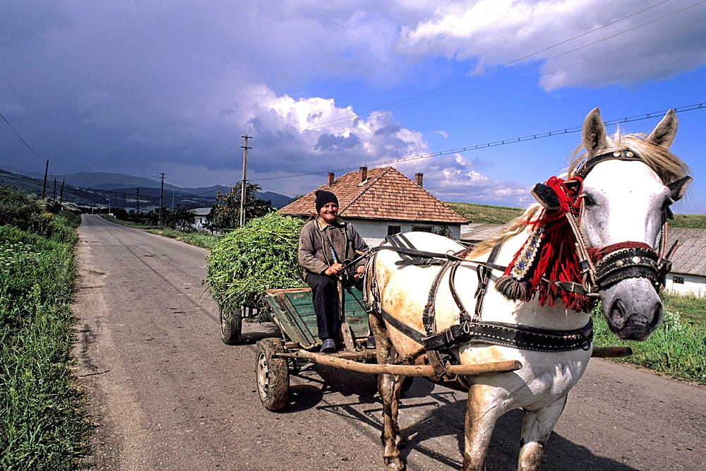 Man on horse drawn wagon with crops in Romania - 817-414917