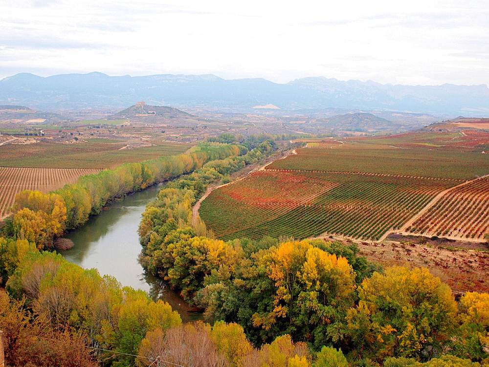 Autumn In La Rioja And Its Vineyards