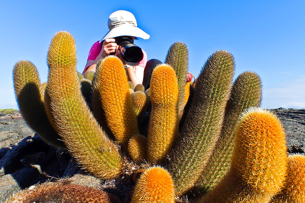 Guest from the Lindblad Expedition ship National Geographic Endeavour with endemic lava cactus on Fernandina Island in the Galapagos Islands, Ecuador