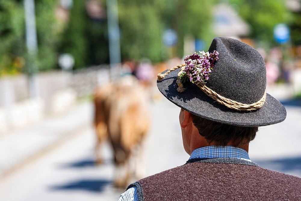 Stock photo of a farmer watching cows returning home for winter