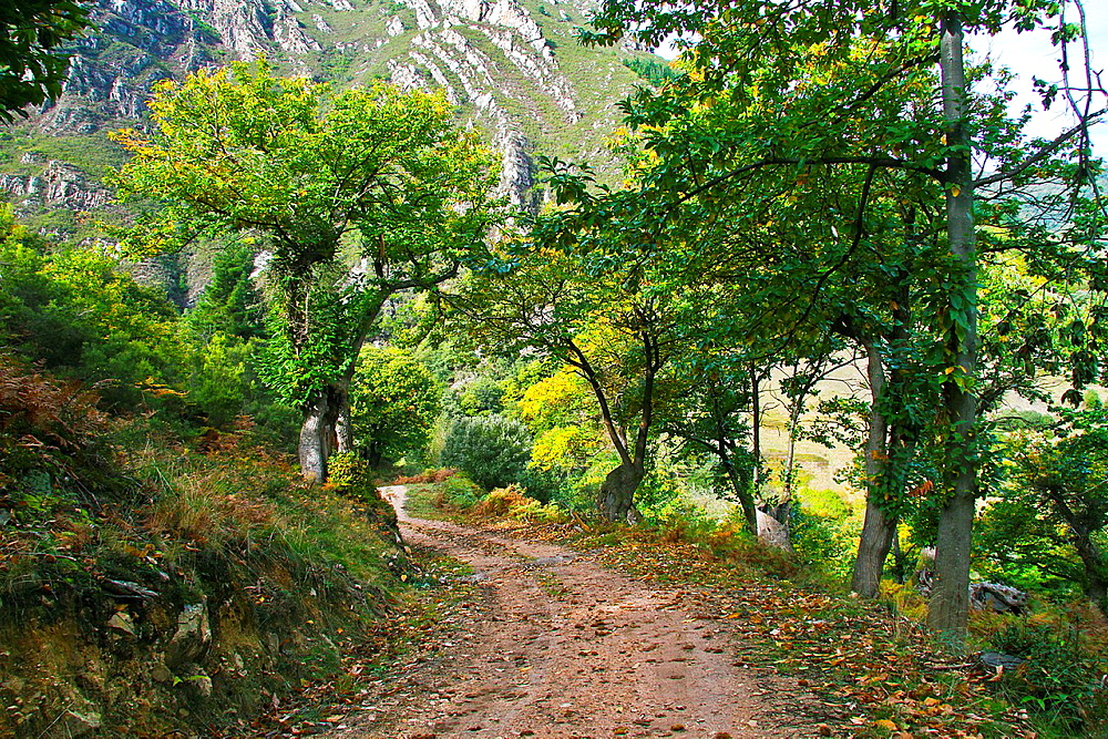 Pathway in the chesnut forest, Asturias, Spain