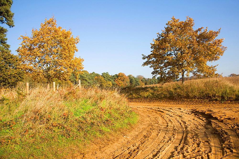 Sandy heathland track road path on Sandlings, Sutton heath, Suffolk, England