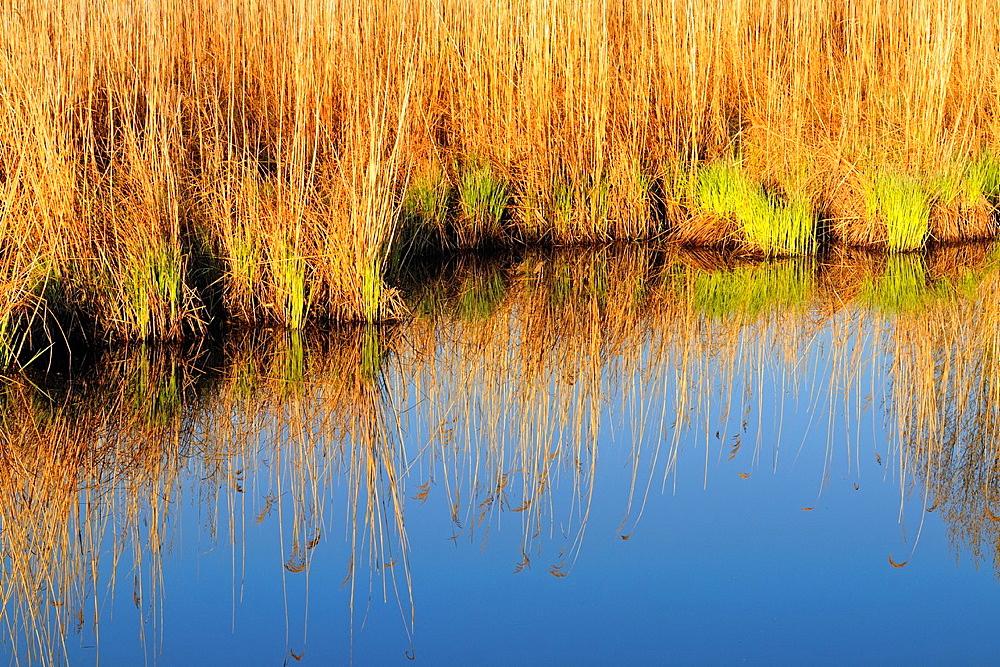 Shoreline grasses reflected in Robinson Lake, Greater Sudbury, Ontario, Canada