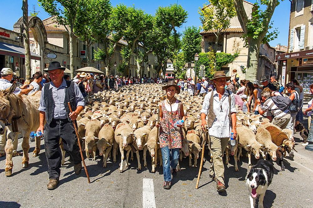 Europe, France, Bouche-du-Rhone, Saint-Remy-de-Provence Festival of transhumance Parade