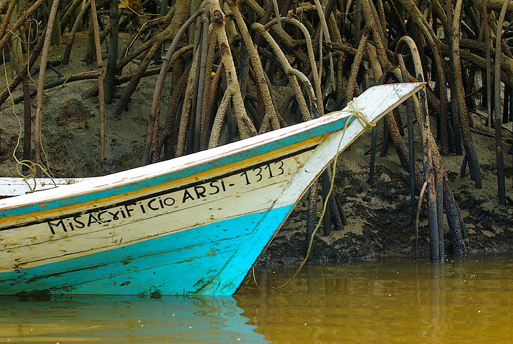 Fisherman's boat and mangrove stilt roots in Turuepano National Park, Eastern Venezuela