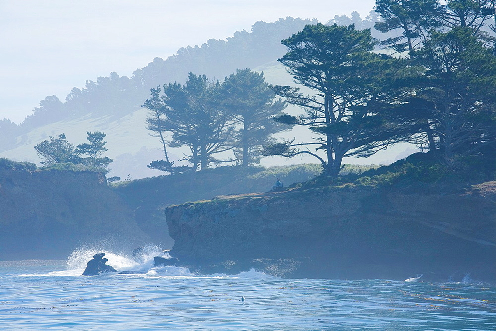Coal Chute Point and Whalers' Cove, Point Lobos State Reserve, Monterey County, California, USA, on a foggy morning, Monterey pine Pinus radiata and Monterey cypress Cupressus macrocarpa trees, man sitting on bench