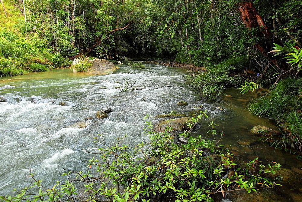 Stream, Sarawak, Borneo