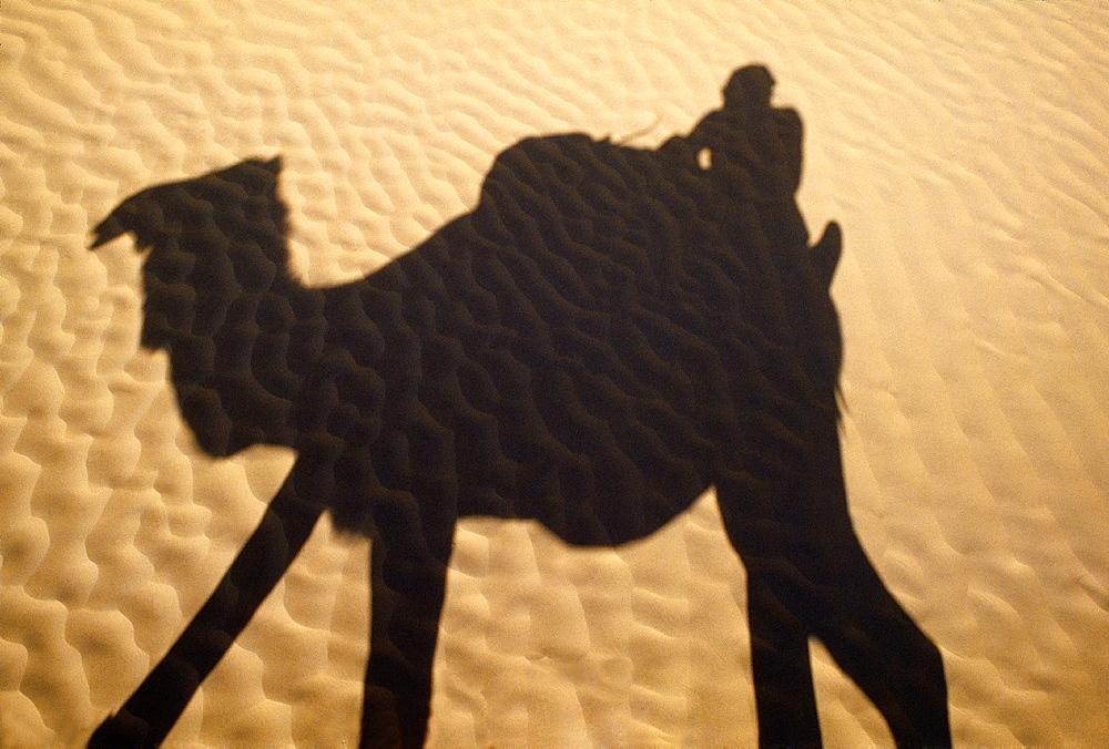 Camel in Sahara desert Southern Tunisia.