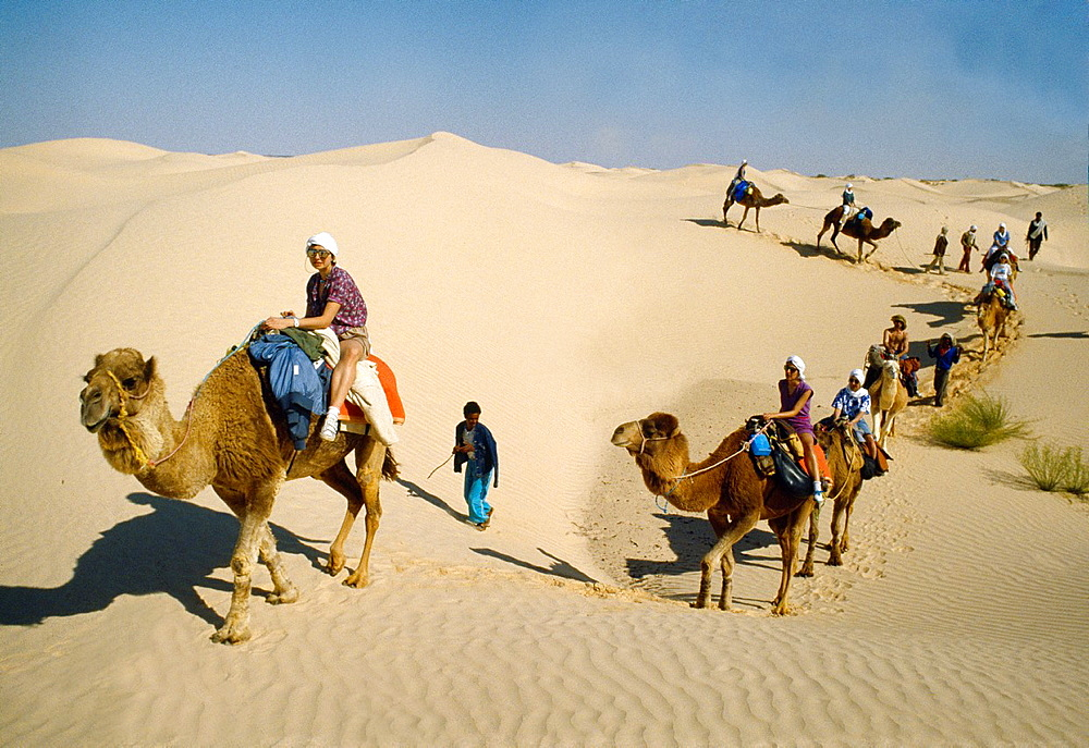 Camel trip by the desert Southern Tunisia.