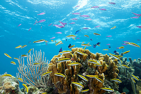 Colorful fish at tropical coral reef