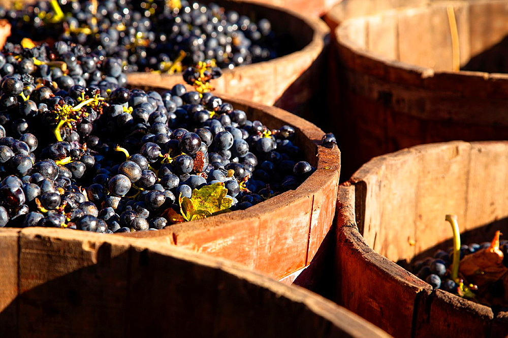 Bodega Lopez de Heria wine cellar in the village of Haro, La Rioja, Spain, Europe
