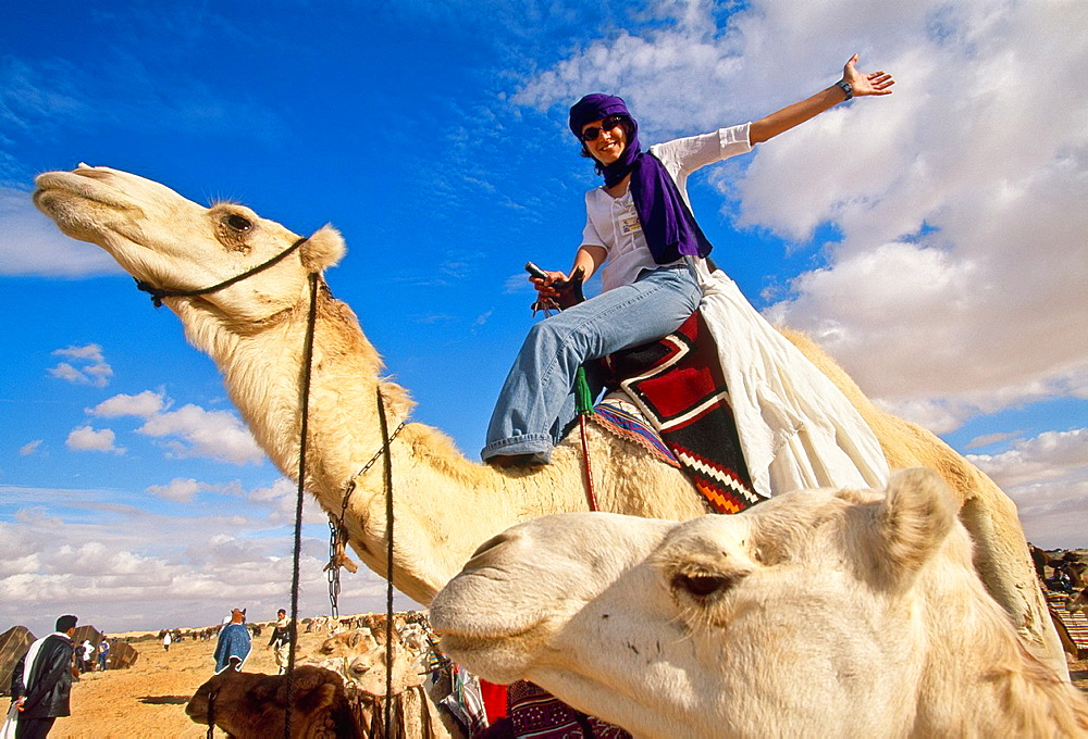 Camel rider International Festival of the Sahara Douz Southern Tunisia. - 817-426171