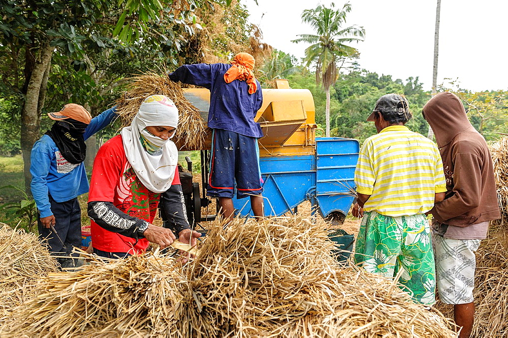group of men threshing rice with a machine, Port Barton, Philippines, Asia