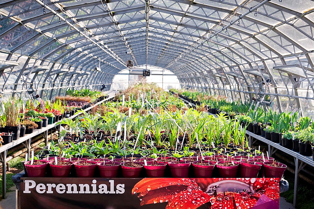 Interior of a greenhouse containing perennials, Stanmer Nursery, East Sussex