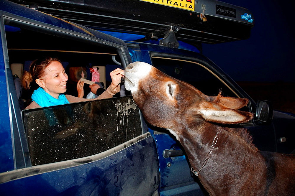 The donkey looks in the car, Cape Tarhankut, Tarhan Qut, Crimea, Ukraine, Eastern Europe